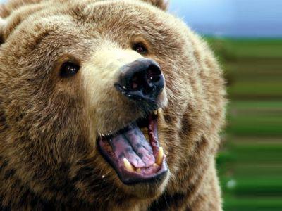 Bearwatching
